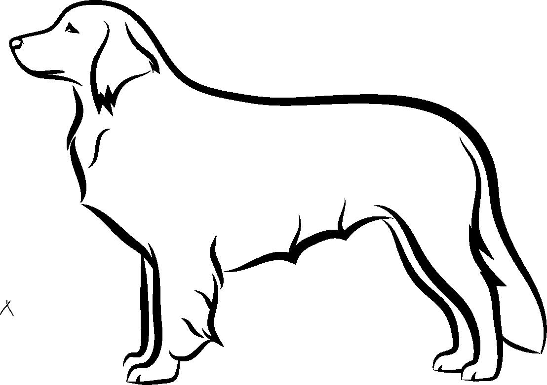 Holandský kachní pes