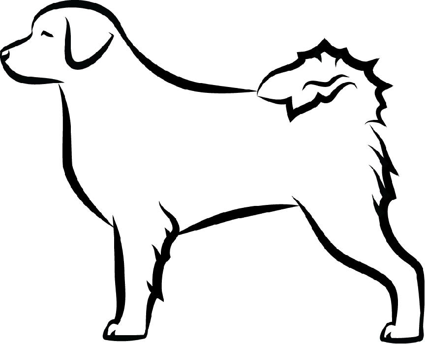 Holandský vodní pes